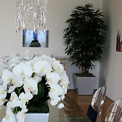 Dining Room Orchids with Tall Rhapis Palm